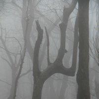 Дерево - гимнаст :: Светлана Попова