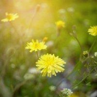 Весенние цветы :: Дмитрий Барабанщиков