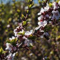 Весна. Пчелы прилетели. :: Андрей