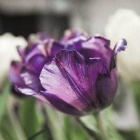 цветы красивы, но печальны :: Александра Кондакс