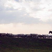 Пастух :: Evgenija Enot
