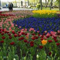Красивая клумба в парке :: Марина