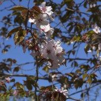 Цветущее дерево :: Aнна Зарубина