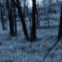Заколдовонный лес.... :: владимир