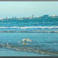 анапа.  море.  шторм. :: Ivana