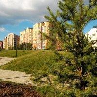 Вид из-из за елки... :: Николай Дони
