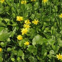 Весной мир оживает сам собой... :: ТАТЬЯНА (tatik)