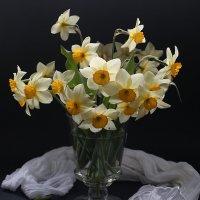 Нарциссы - цветы весны :: Татьяна Карачкова