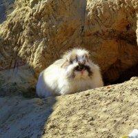 из жизни кроликов 1 :: Александр Прокудин