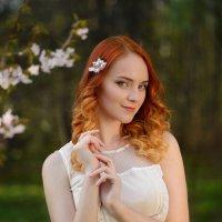 Sakura :: Ludmila Zinovina