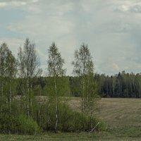 Поле весной. :: Яков Реймер