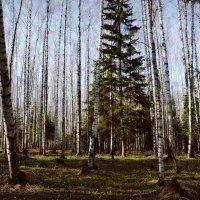 В лесу :: Екатерина Таскаева