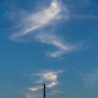 Караван небесных змеев держит курс на норд :: Алексей (АСкет) Степанов