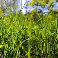 В травы упасть - майские... :: Валентина ツ ღ✿ღ