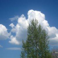 Облака и дерево :: Елена Семигина