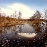 Последние льдинки :: Валерий Талашов