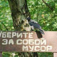 Берегите природу, мать вашу! :: Nina Grishina