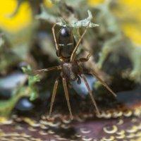 паук :: Александр Давыдов