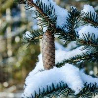 конец зимы :: SlaYva SlaYva