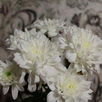 Цветы :: Яна Савина
