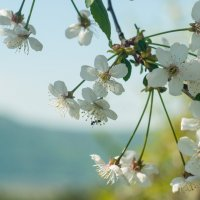 Муравьишка в цветочке :: Albina