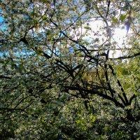 Весна :: Николай П