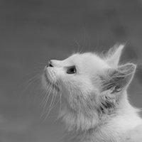 Моя кошка :: Фазлиддин Инагамов