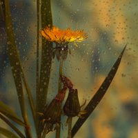 Во цвете дней :: Ирина Сивовол