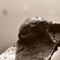 лягушка, выходящая из анабиоза :: Юлия Зырянова