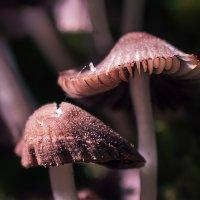 shrooms... :: Анна Семенова