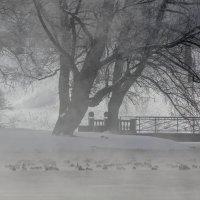 1 марта :: Алёнка Шапран