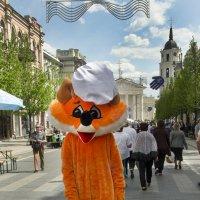 Firefox на прогулке :) :: Kliwo