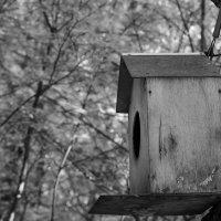 Птичье пристанище :: Татьяна Буркина