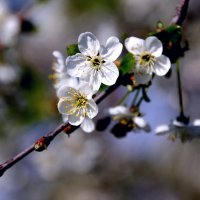 Весна. :: Валерия  Полещикова