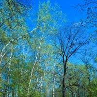Дорога в лесу :: Сергей Тагиров