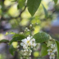 Весна красна! :: Valentina