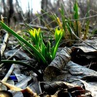 Начало весны :: Сандра Гро