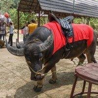 Парк Пренн в Далате (Вьетнам). :: Татьяна Калинкина