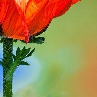 Все оттенки весны :: Владимир Шамота