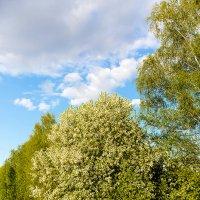 Spring trees :: Sergey Sergaj