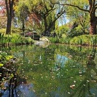 Гуляя в японском саду 3 :: Alexander Andronik