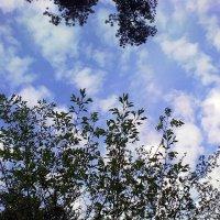 Небо над питомником-3 :: Сергей Гвоздев