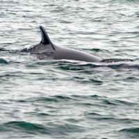 а вот и кит) :: Ingwar