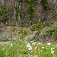 В весеннем лесу... :: Юлия Бабитко