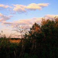 Майский ласковый тихий вечер ... :: Евгений Юрков
