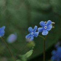городские цветы :: Nikita S