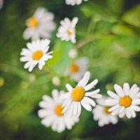 flowers :: Анастасия Фролова