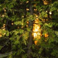 Закат в лесу :: Юрий Путнин