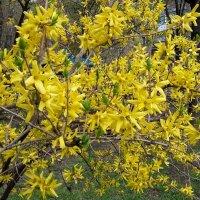 Весна в городе :: Вера (makivera)