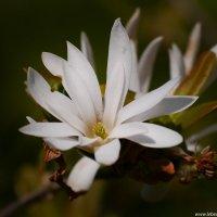 Цветок :: Дмитрий Лебедихин